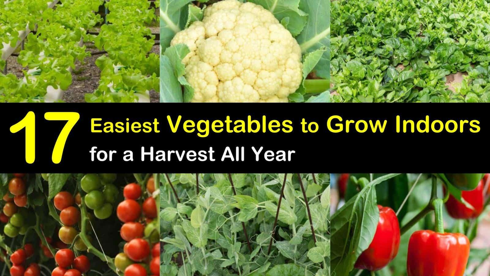 growing vegetables indoors titleimg1