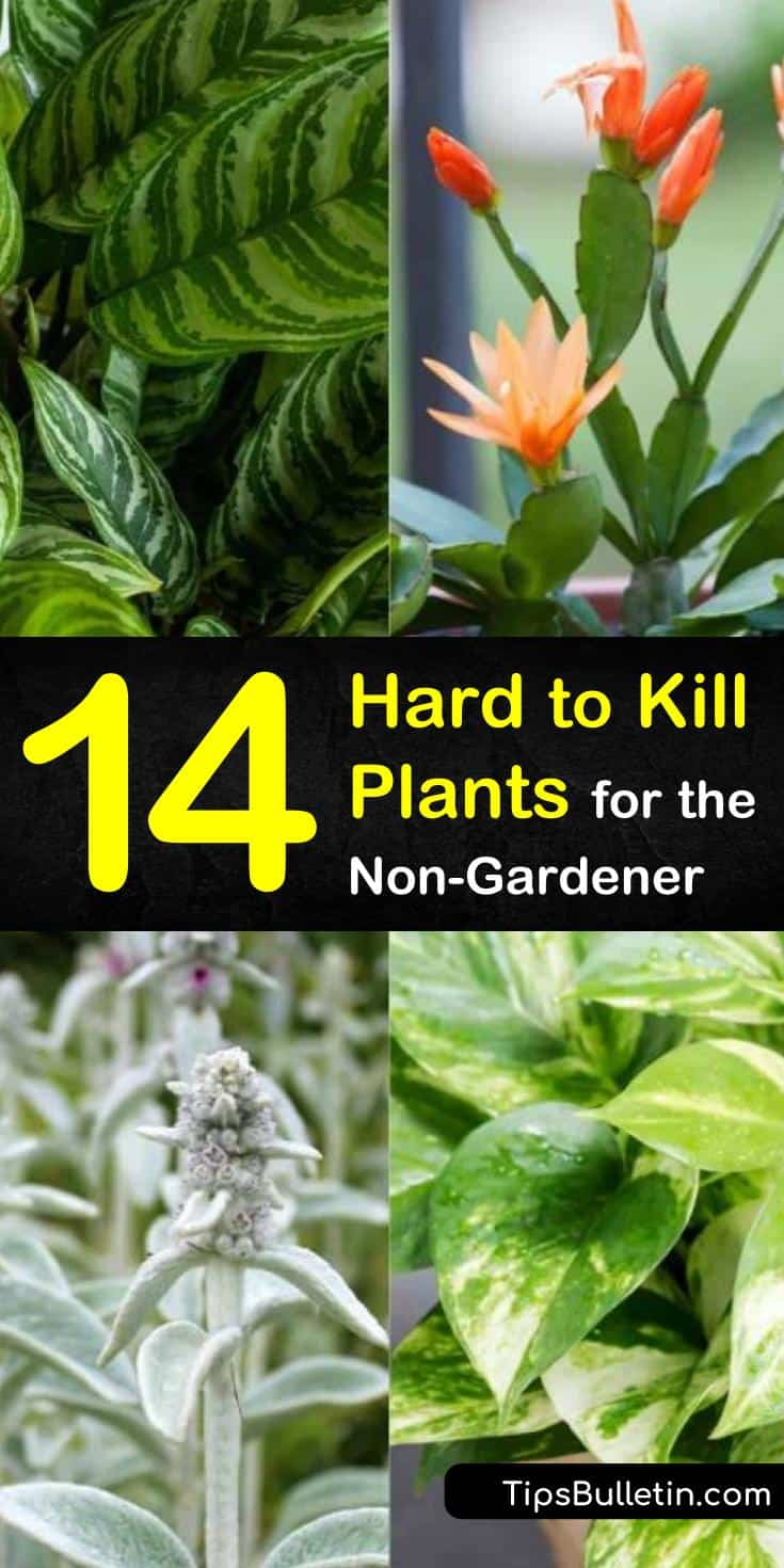 Discover 11 hard to kill houseplants for your apartment therapy needs. Try plants like aloe, succulents, and air-cleaning plants for indoor or outdoor gardening. Grow them in pots inside your home or garden to keep your surroundings green and healthy. #hardtokillplants #plants