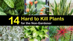 hard to kill plants titleimg1