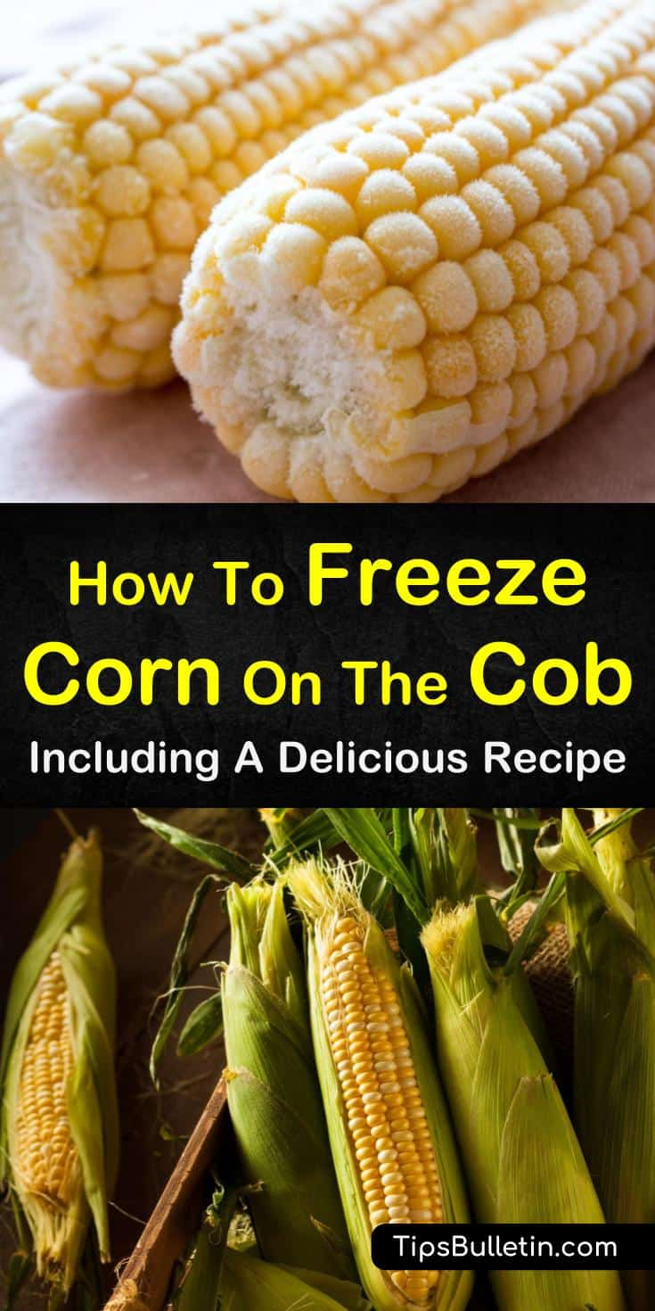 Find out how to freeze corn on the cob! If you're used to freezing your corn without blanching, you'll be amazed at how tasty your frozen corn can be. Get the taste of summer all year long! #freezing #cornonthecob #homepreservation