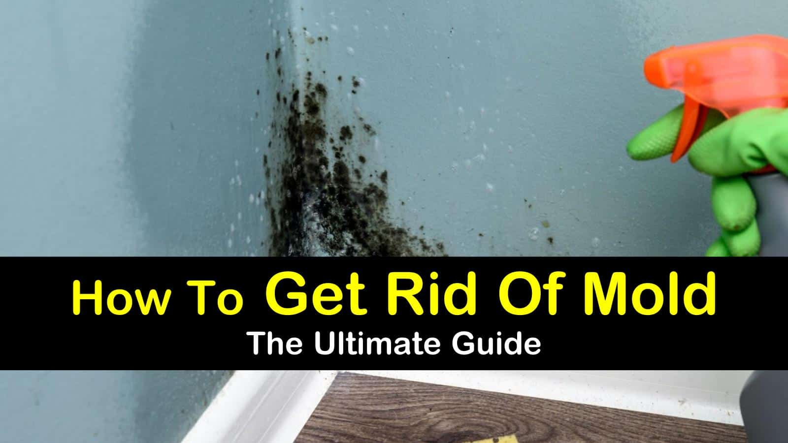 how to get rid of mold - the ultimate guide