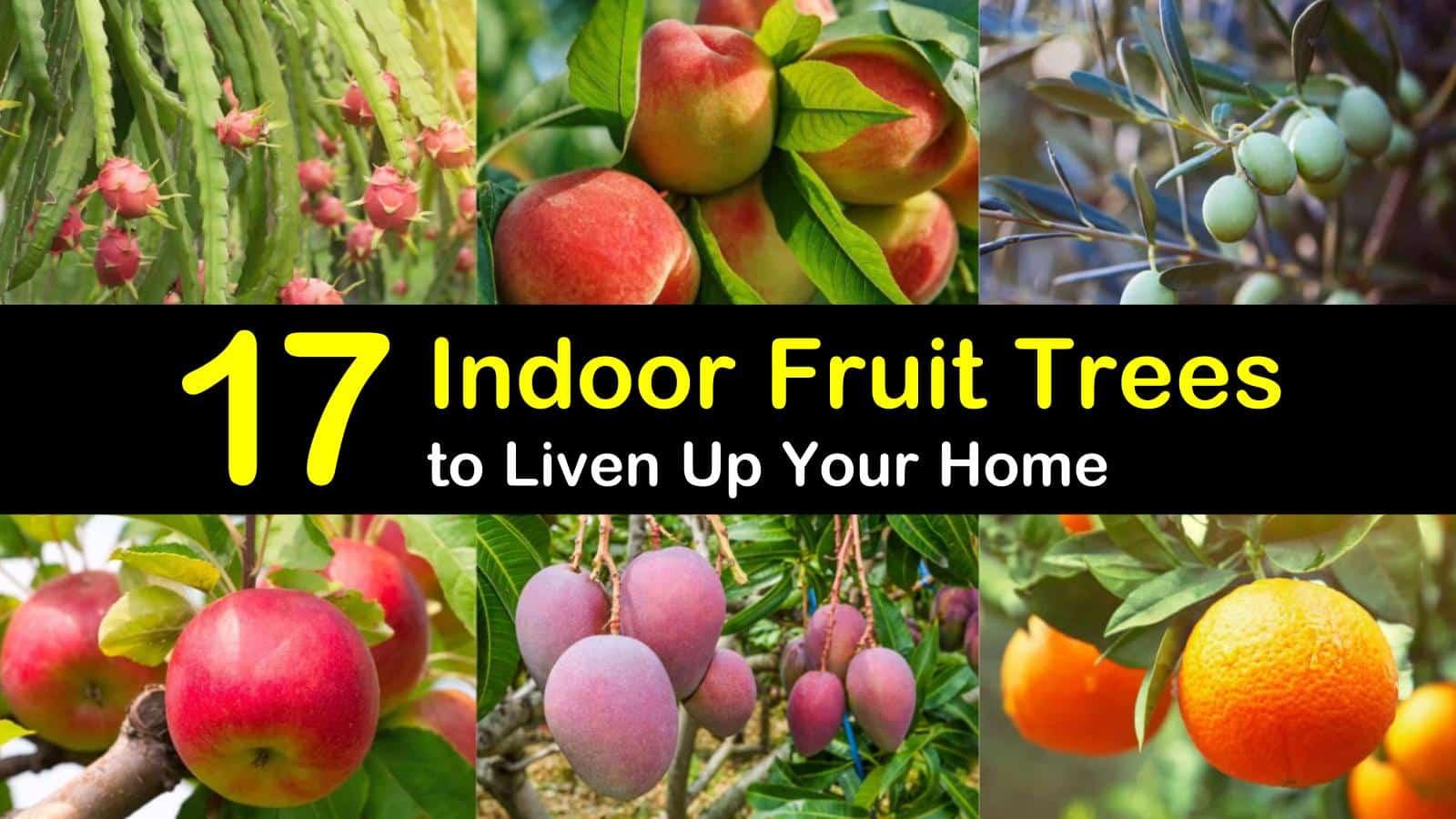 indoor fruit trees titleimg1