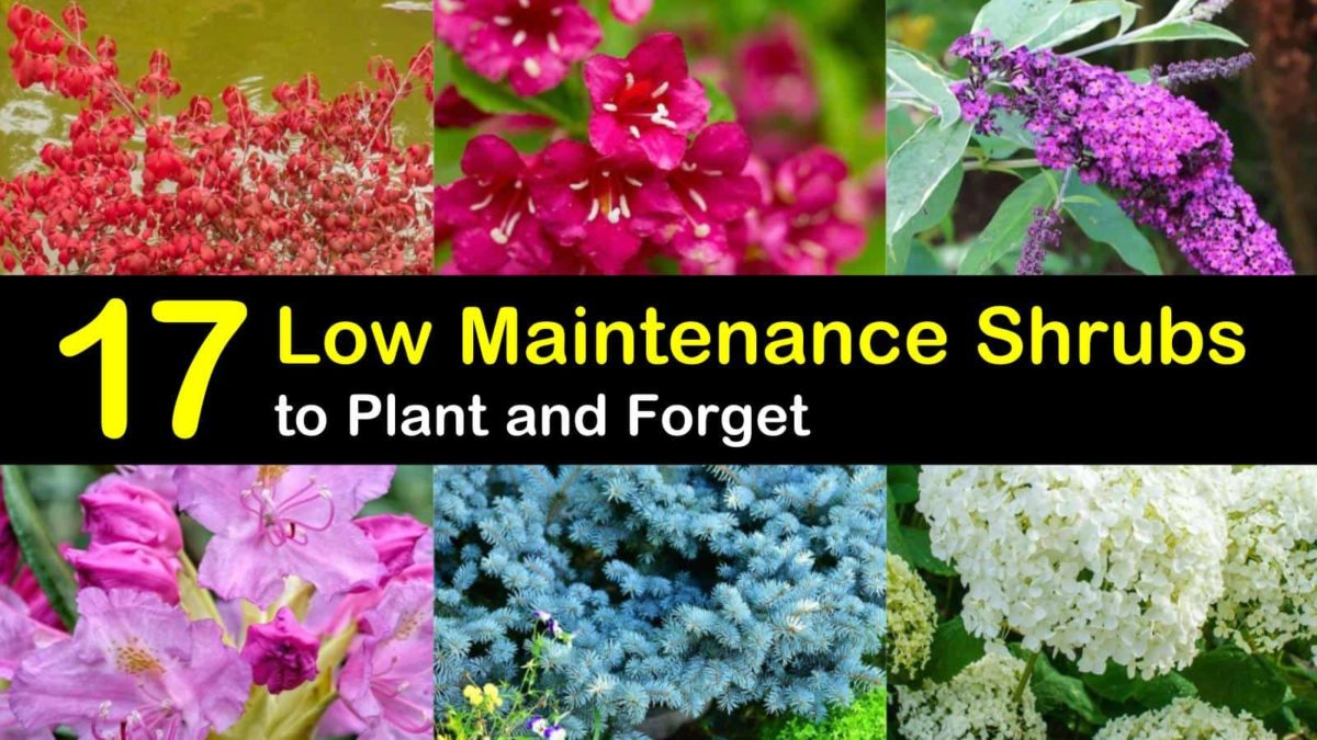 17 Low Maintenance Shrubs to Plant and Forget