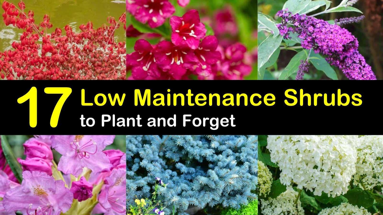 low maintenance shrubs titleimg1