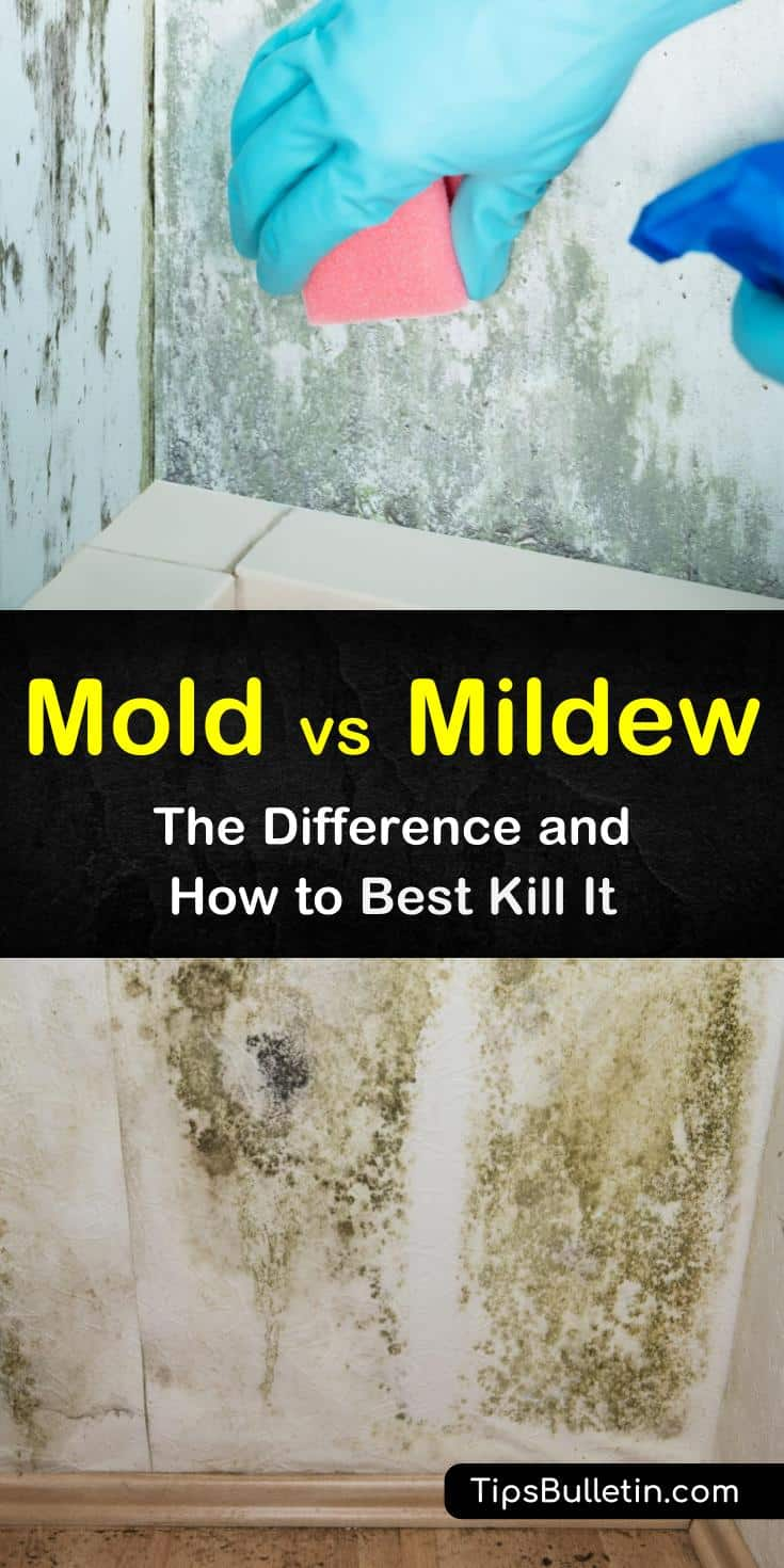 Mold vs mildew - the difference and how to best kill it is an important study to keep your family safe and healthy. Our guide shows you how to tell mold from mildew and provides great DIY cleaning remedies featuring hydrogen peroxide and vinegar. #moldandmildew #mold #mildew
