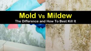 mold vs mildew titleimg1