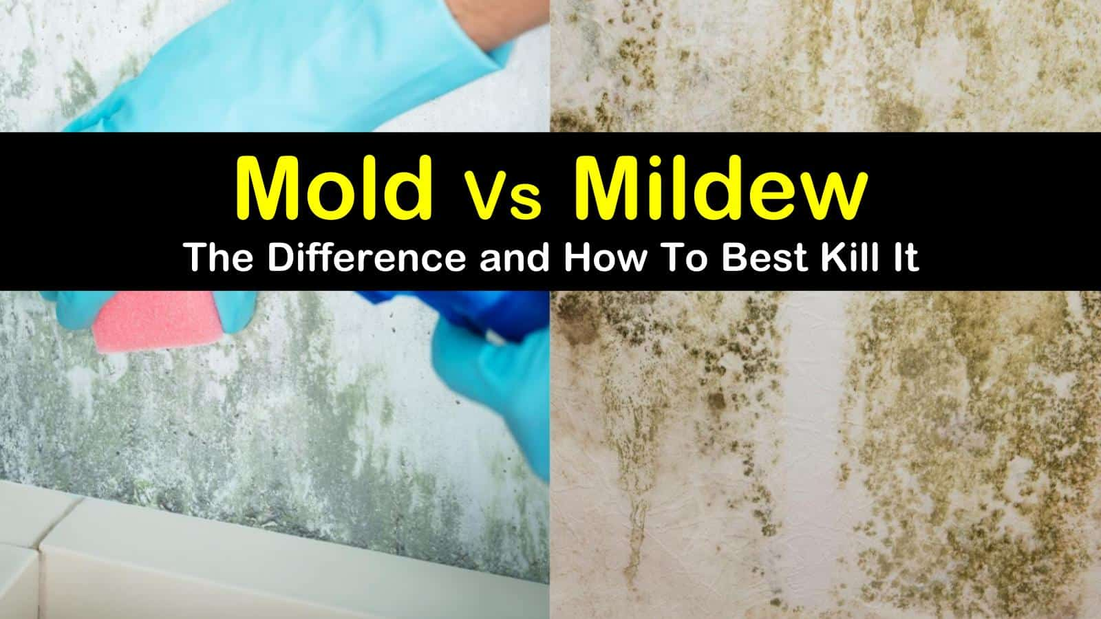 Mold Vs Mildew The Difference Between Mold And Mildew