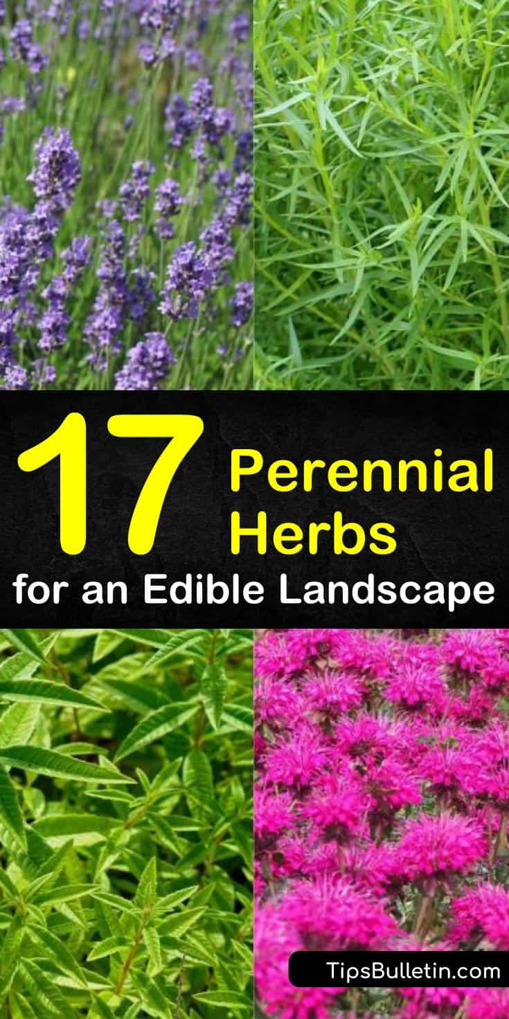 Make your herb garden flower and shine! Our guide to perennial herbs for shade show you how to grow drought-tolerant plants and vegetables from seeds for shade and sun alike. Fill your landscapes with herbs for all seasons! #perennials #herbs #herbgarden #gardening