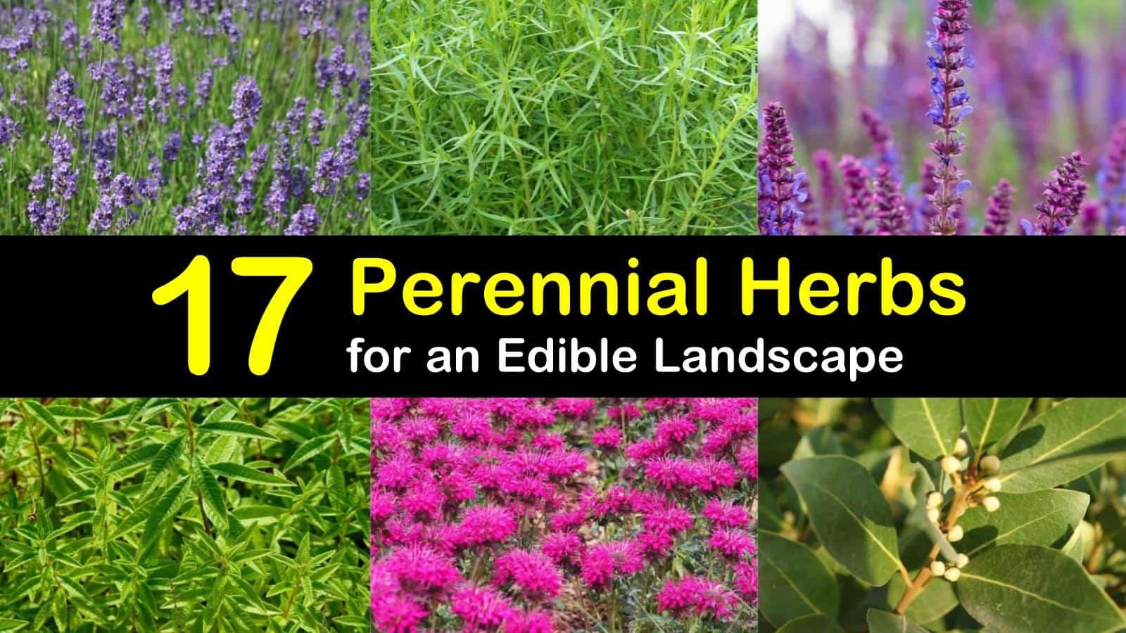 perennial herbs titleimg1
