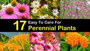 perennial plants titleimg1
