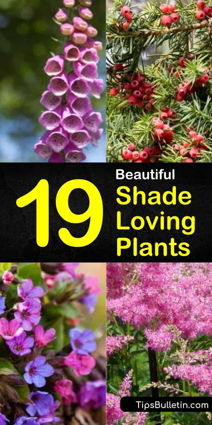 Learn all about the different kinds of shade loving plants. With so many beautiful options, you will be able to utilize every inch of your garden and landscaping space to create a breathtakingly beautiful garden. #shadeplants #gardening #landscaping