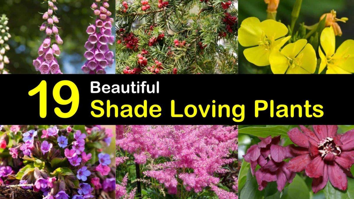 19 Beautiful Shade Loving Plants