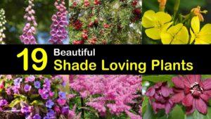 shade loving plants titleimg1