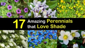 shade perennials titleimg1