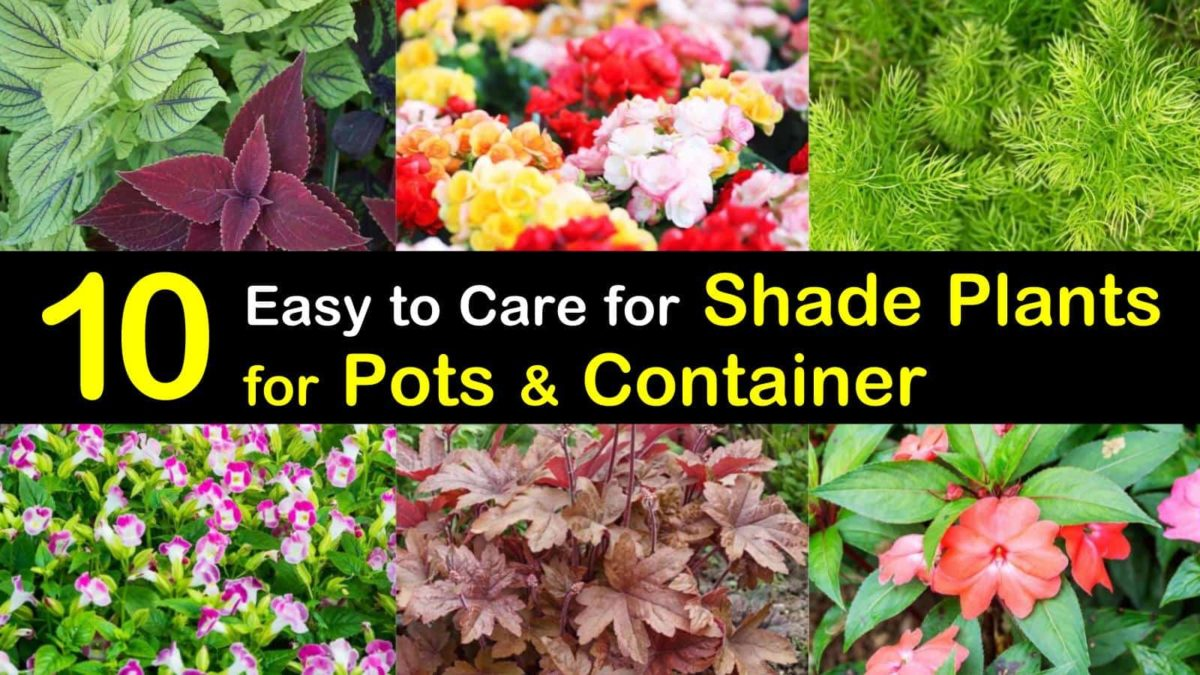 10 Easy To Care For Shade Plants For Pots
