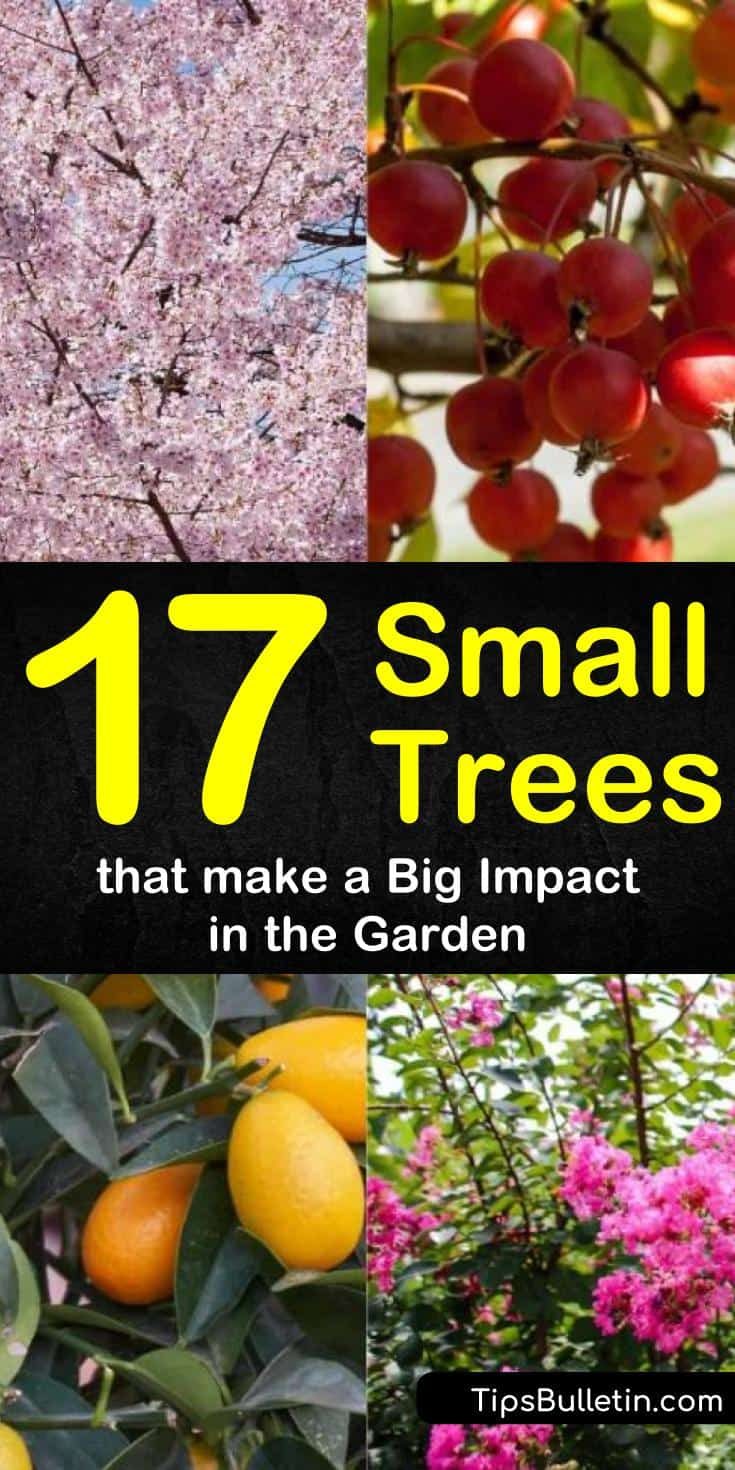 Discover the best small trees for backyard displays and for front yard arrangements. Give your back yards and front porches curb appeal with drought tolerant trees for flower beds, in pots, for privacy, and for garden greatness! #small #trees #gardening #landscaping