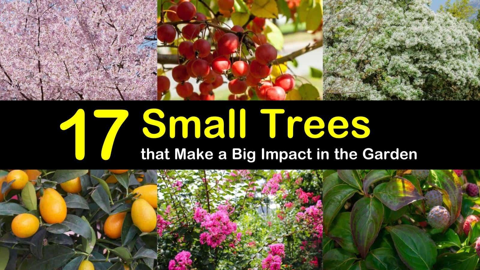 small trees titleimg1