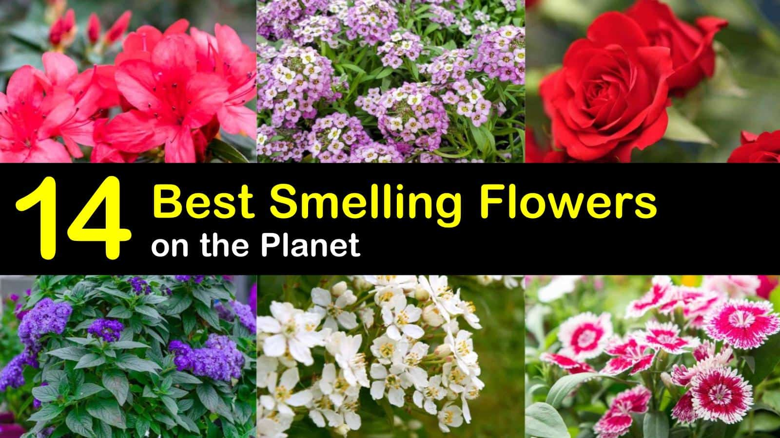 best smelling flowers titleimg1