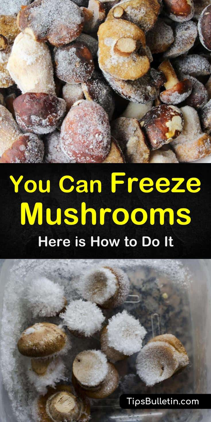 Learn how to freeze mushrooms for long-term storage. Our guide shows you how to preserve your mushrooms and gives you freezing recipes so you can enjoy them all year long. Your crock pot and chicken soups will thank you, and so will your family! #mushrooms #freezing
