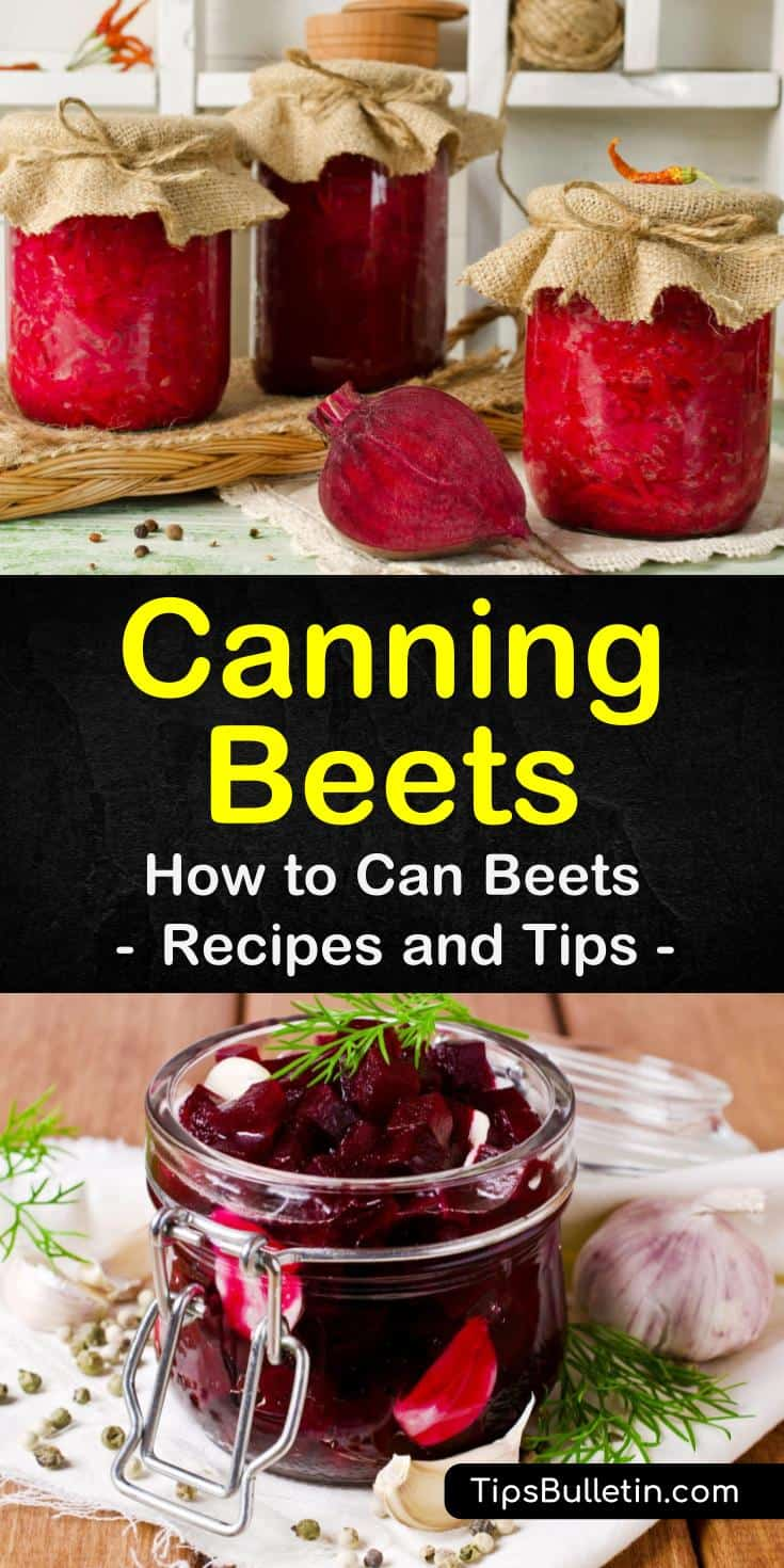 Find out the best ways to preserve beets plain with no sugar and without a water bath. Our guide to pickling beets includes multiple recipes with cider vinegar and shows you how to process your jars in a pressure canner. #homepreservation #canning #beets