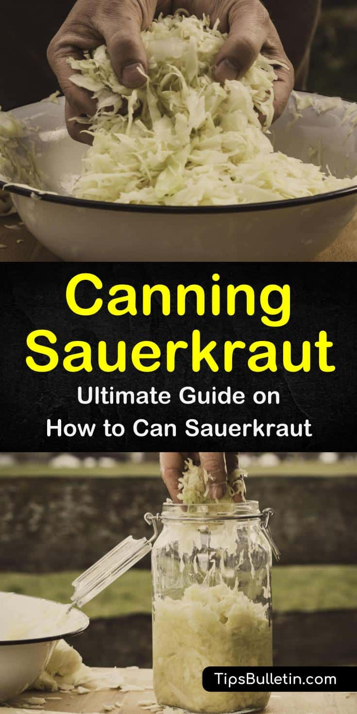 Discover how to can homemade sauerkraut using simple supplies like salt and mason jars. Follow these step-by-step procedures to ferment foods for powerful immunity boosters. Learn new recipes for canned sauerkraut dishes. #canning #sauerkraut #fermenting