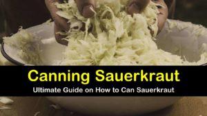 canning sauerkraut titleimg1