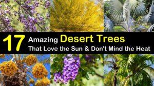 desert trees titleimg1