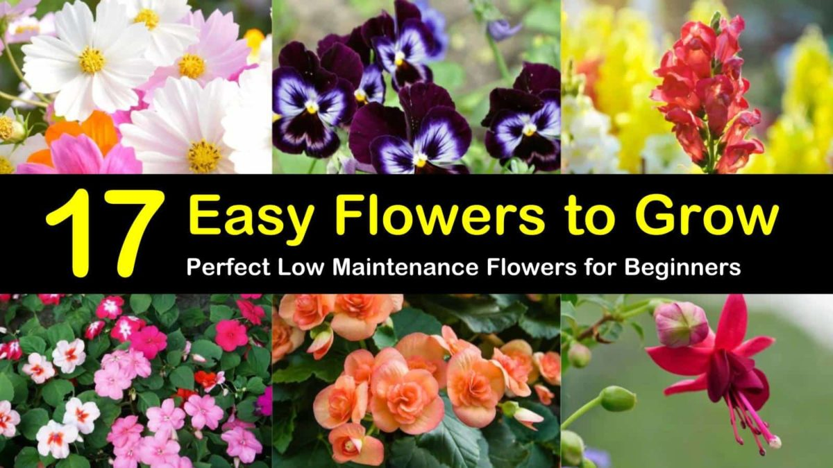 17 Easy Flowers To Grow Perfect Low Maintenance Flowers For
