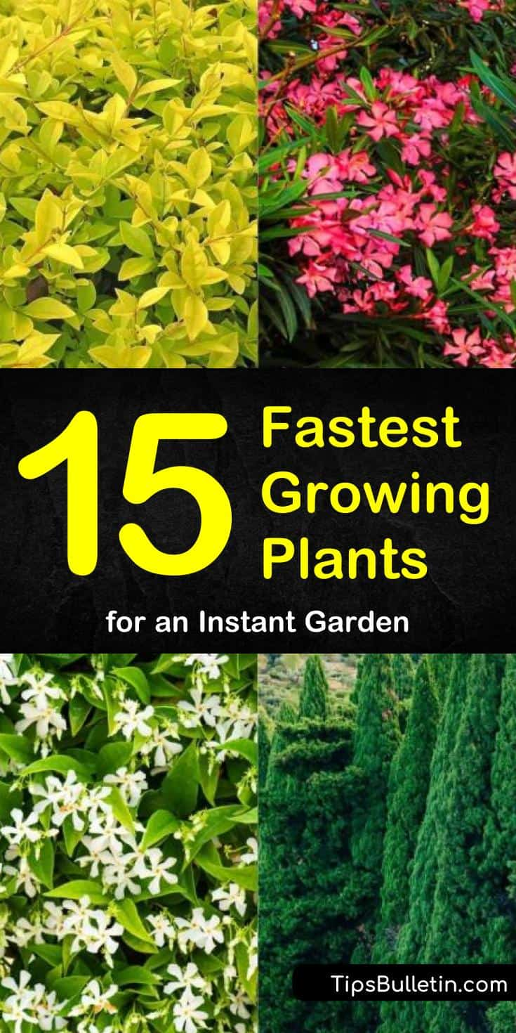Come learn how to transform your backyard into a gardening paradise using the fastest growing shrubs for privacy. Whether you are starting from seeds or gallon pots come learn which of the fastest growing flowering plants are best for children and pets. #fastgrowingplants