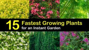 fastest growing plant titleimg1