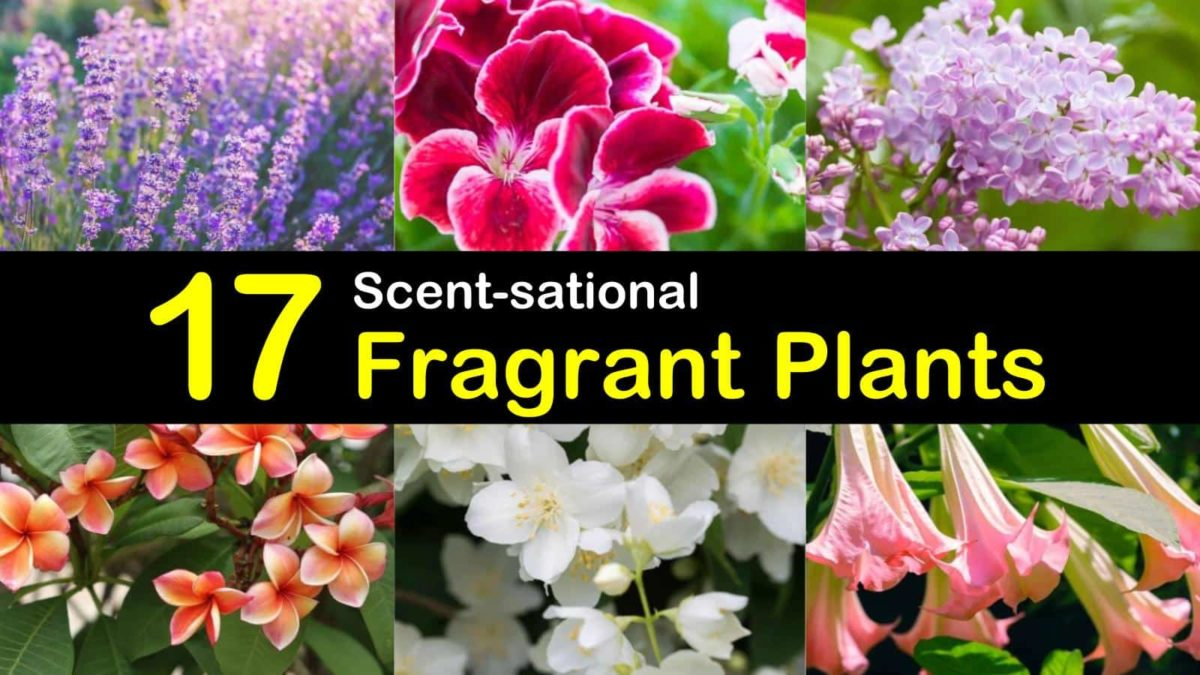 17 Scent-sational Fragrant Plants for Your Outdoor and Indoor Gardens