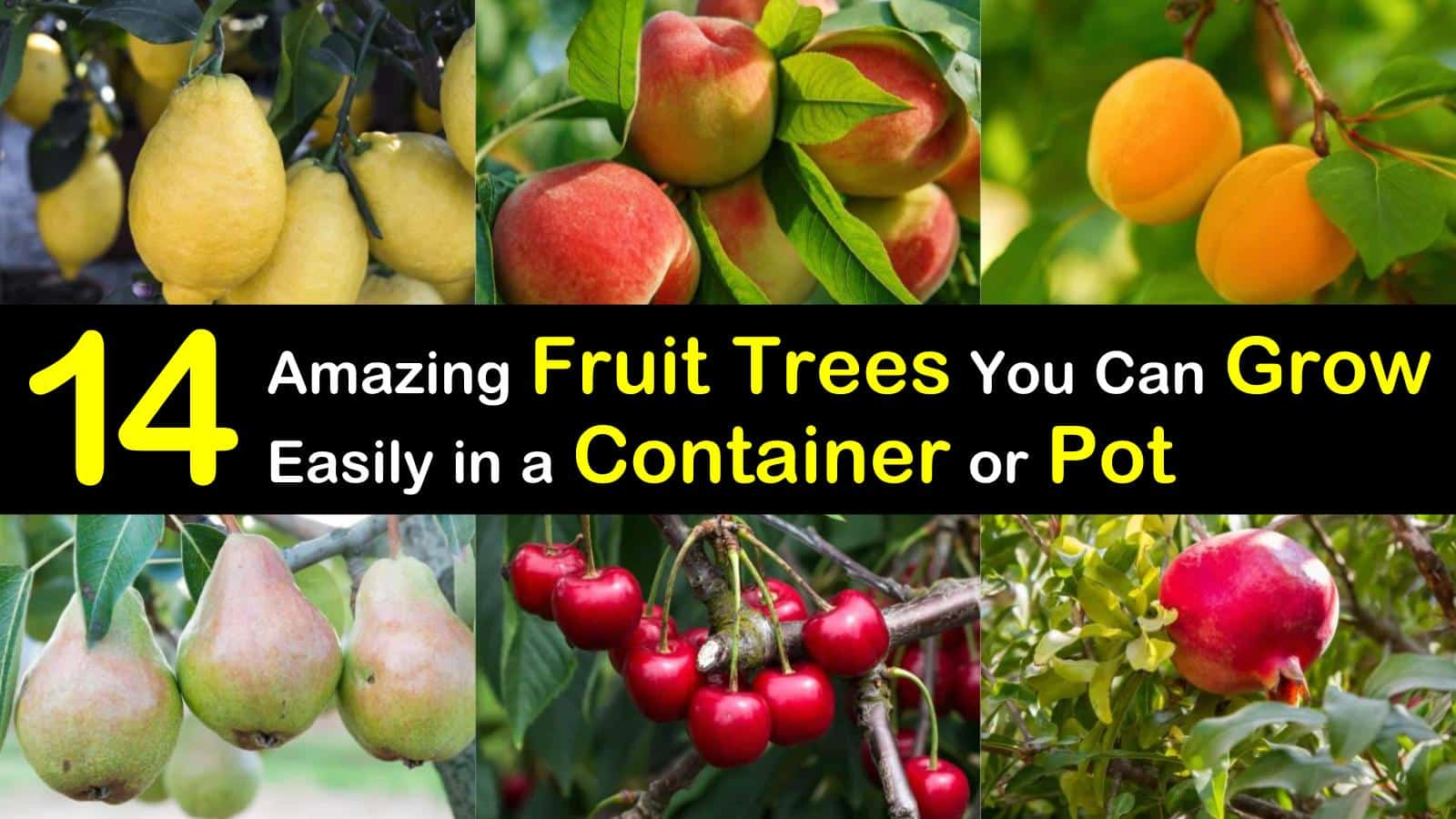fruit trees in container titleimg1