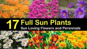 full sun plants titleimg1