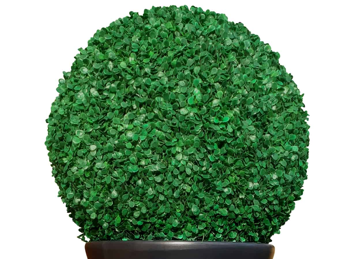 green mountain grows well in a container