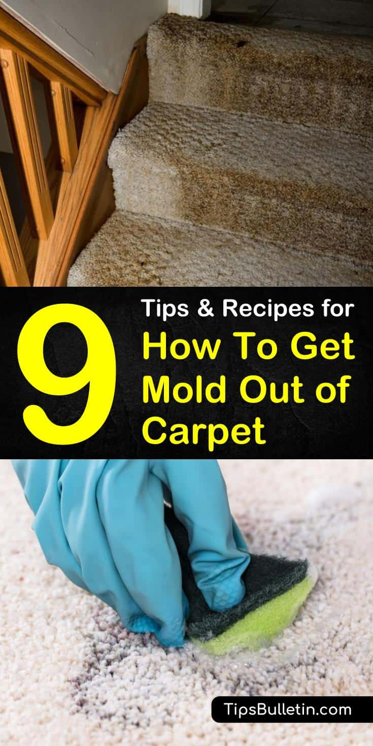 9 Amazing Tips And Recipes For How To Get Mold Out Of Carpet