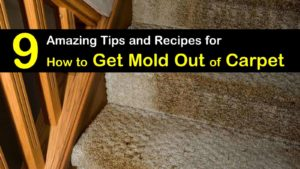 how to get mold out of carpet titleimg1