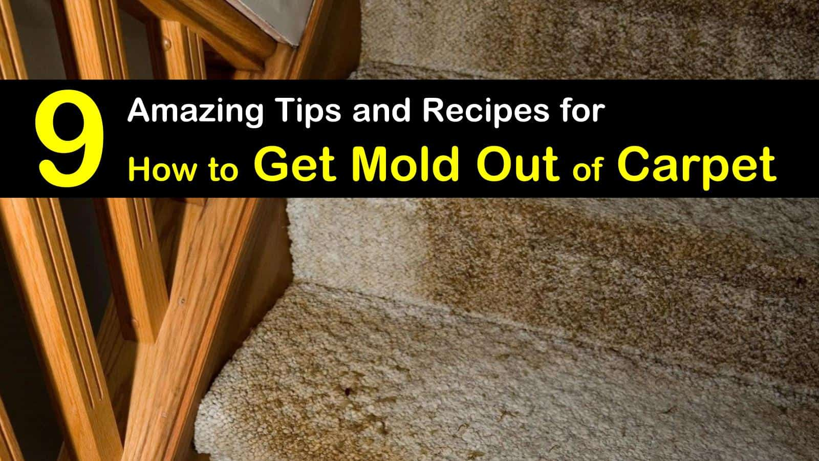 Vinegar Kill Mold Carpet