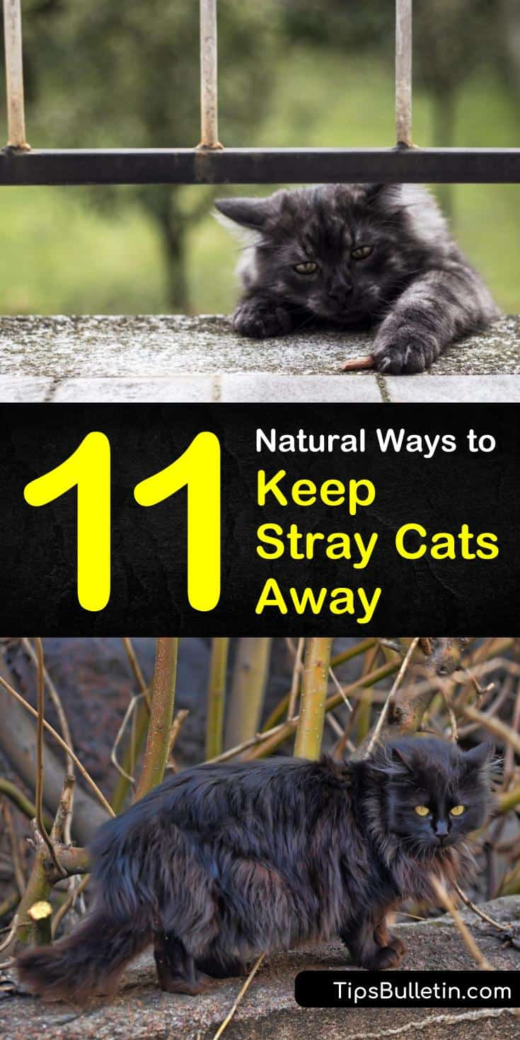 Discover how to keep stray cats away from yards, from porches, from house area, from furniture, and from garden beds. Our guide keeps the neighbor's kitty out of your garden but won't hurt your dogs or other pets. #straycats #keep #cats #away