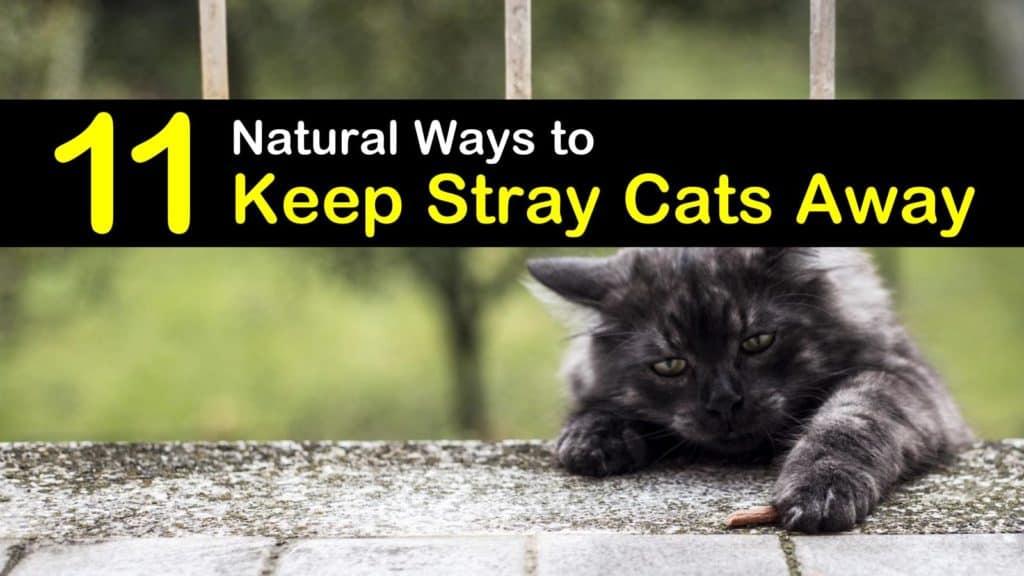 11 Natural Ways to Keep Stray Cats Away