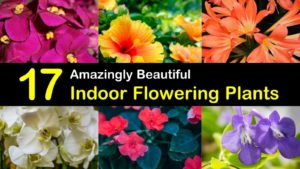 indoor flowering plants titleimg1
