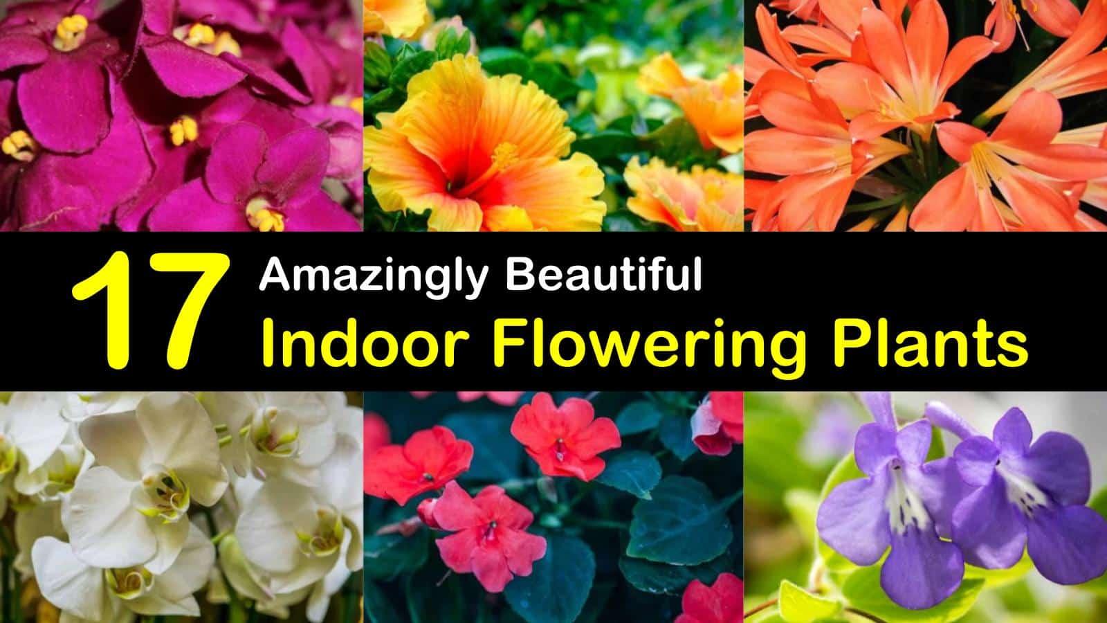 indoor flowering plants titleimg1