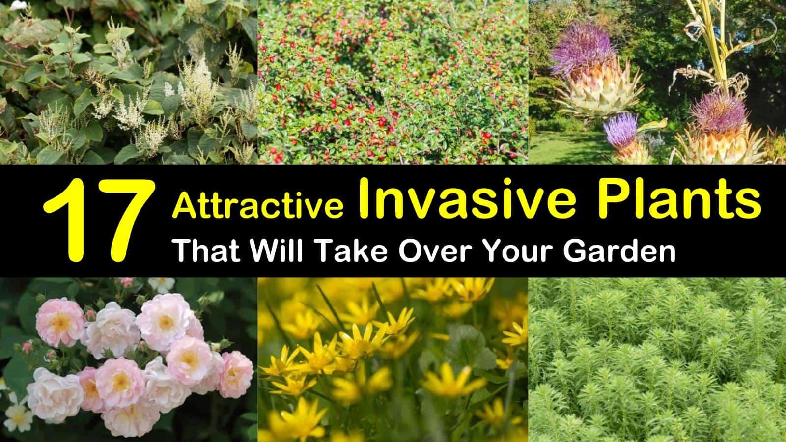 invasive plants titleimg1