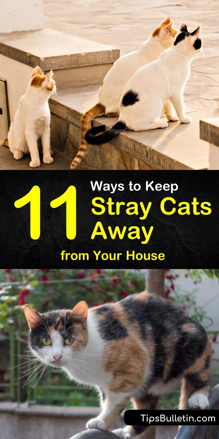 Discover 11 easy methods of keeping stray cats away from your yards. This simple guide will ensure the neighborhood strays keep their distance! #keepstraysaway #cat #repellent #feralcats