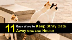 keep stray cats away from your house titleimg1