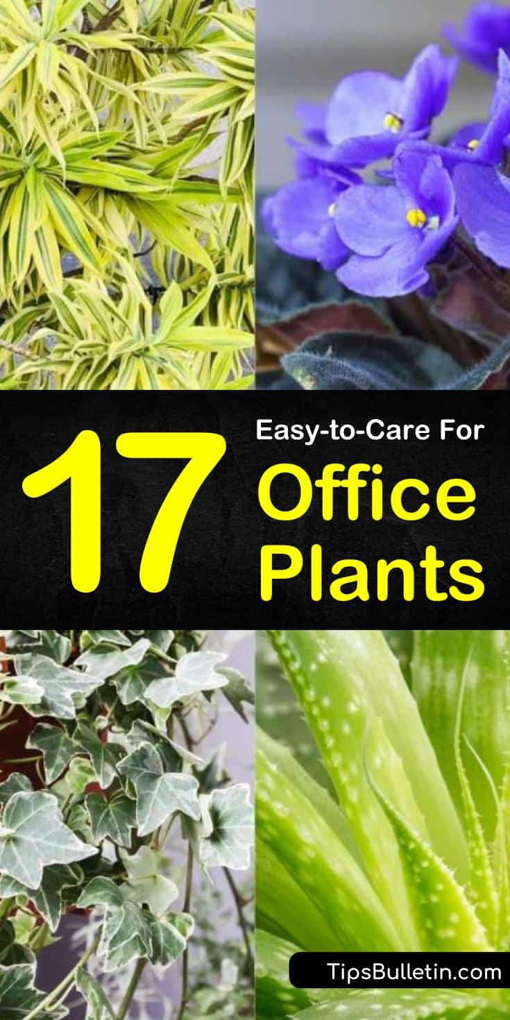 Add a personal touch to your workspaces and cubicles with low light desk plants. Many of these plants act as a natural air purifier and require no sunlight making them an excellent choice for small spaces. #office #plants