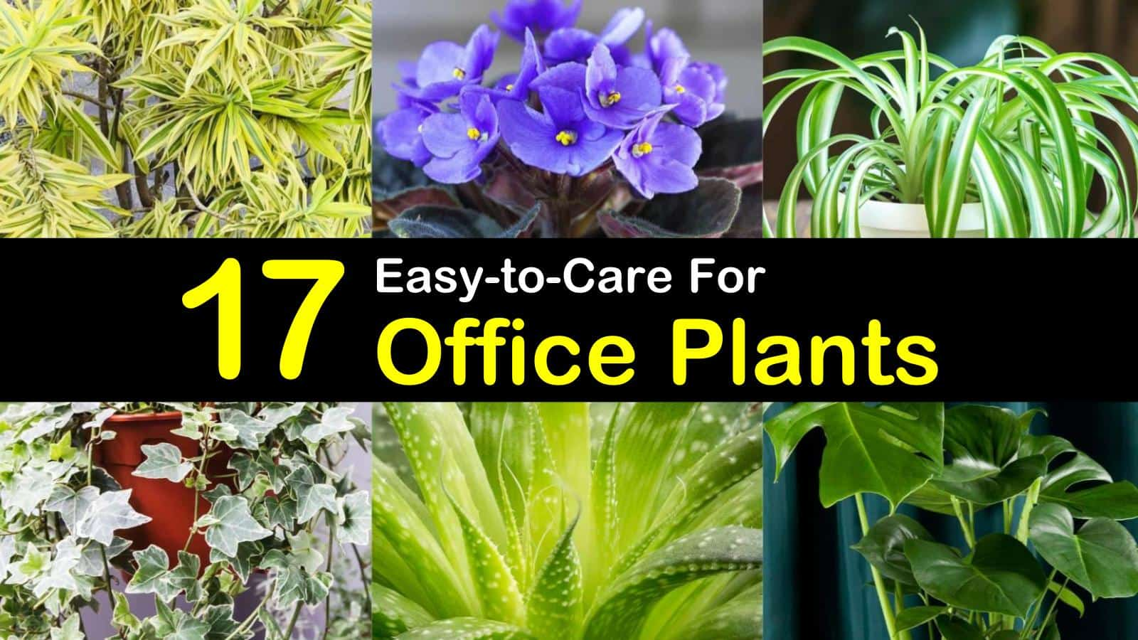 office plants titleimg1