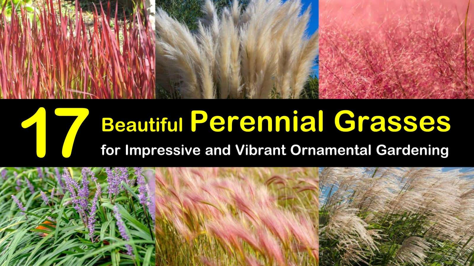 17 Beautiful Perennial Grasses For Impressive And Vibrant