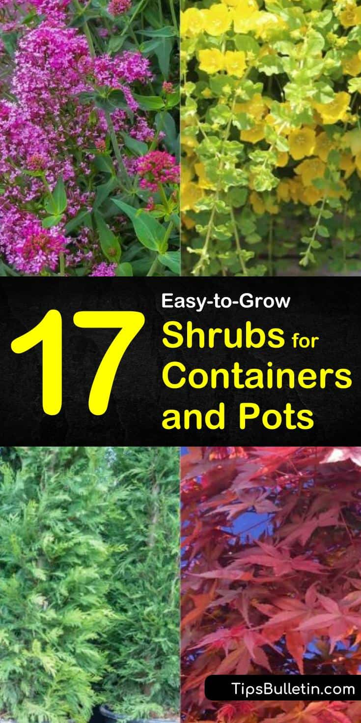If you have small gardens you can expand your landscaping by using planters on your patio, deck, balcony, etc. Learn how easy it is to add and care for perennials in your favorite outdoor pots. #containergardening #container #shrubs