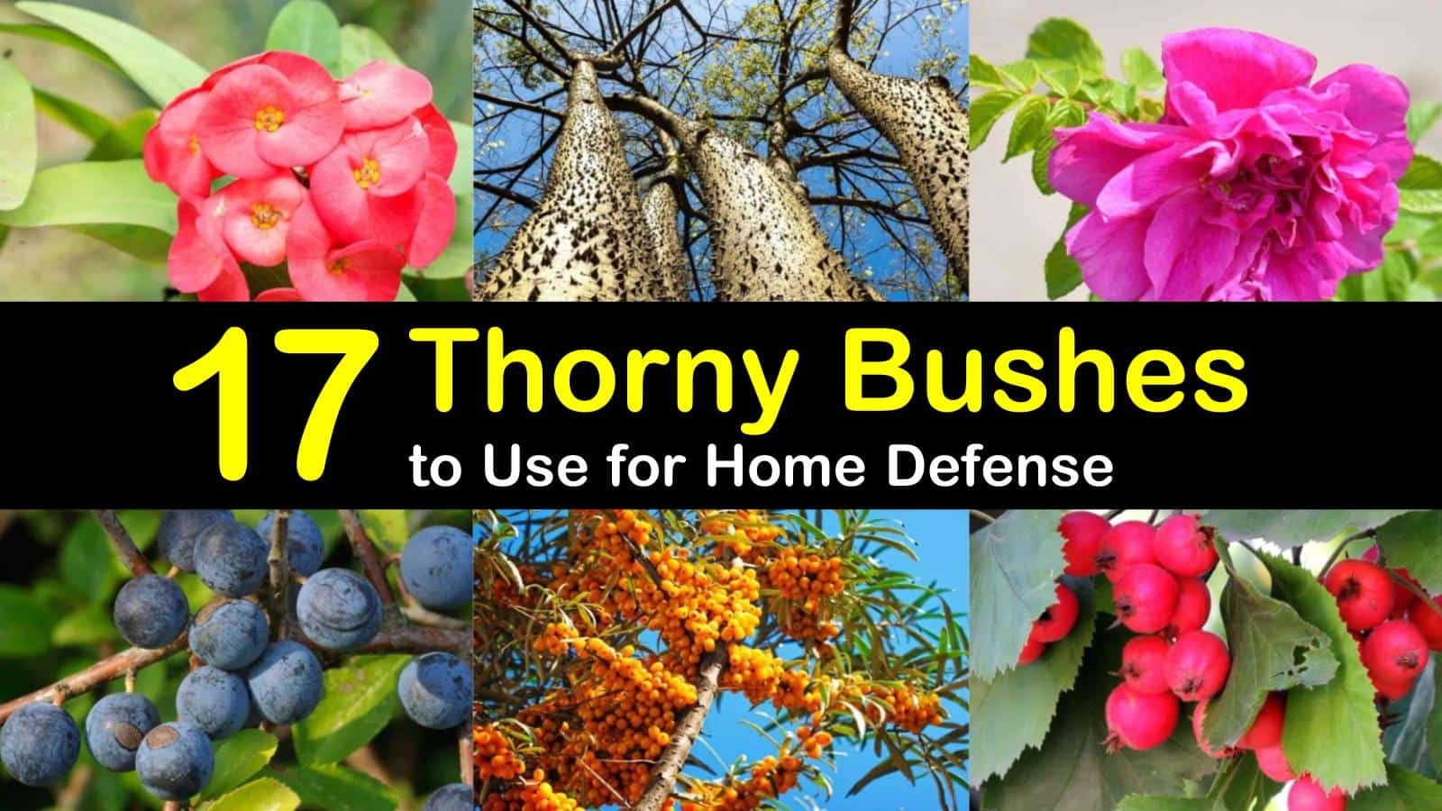 17 Thorny Bushes To Use For Home Defense