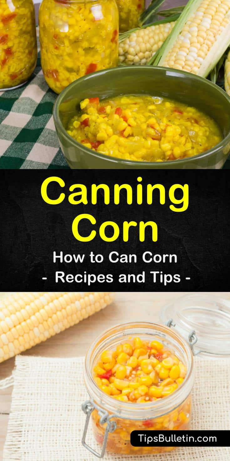 Find out the best way of canning corn with a pressure canner. Our guide and canning recipes show you how to preserve your corn on the cob for long-term use and gets it ready for wintertime salsa or relish with chili powder. It's easy and fun! #homepreservation #canning #corn